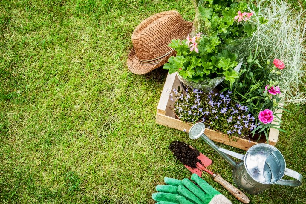 plants in a wooden box and gardening tools