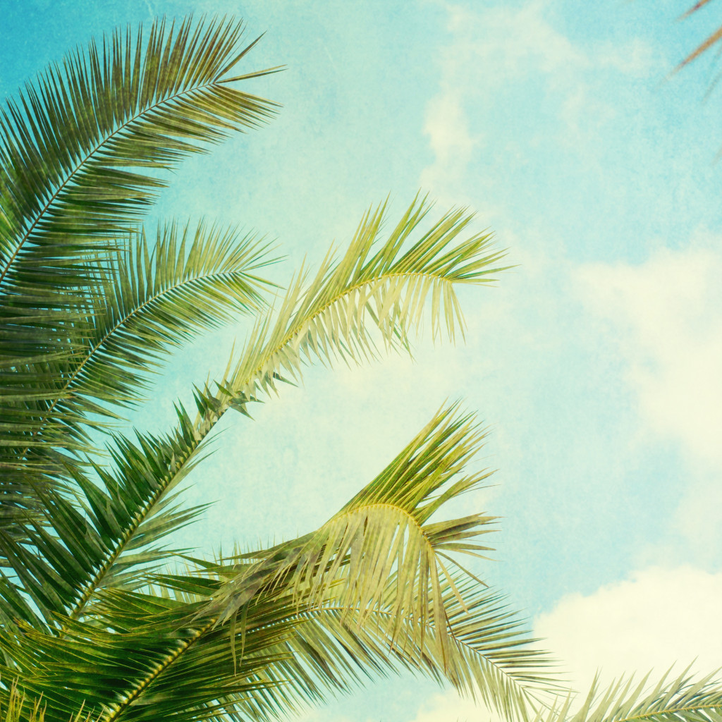 Legitimate Reasons to Explore the Island of Aloha: Hawaii