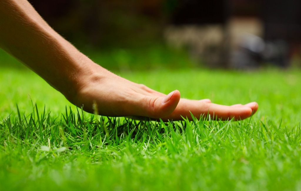 Caring for Your Lawn When You're Away for One to Two Weeks or for a Month